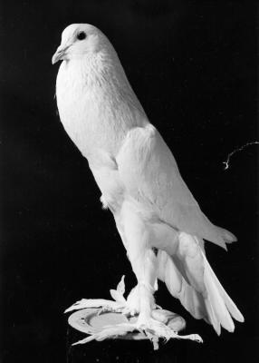 Petra Feriancova, Creator 2008, New Breeds 1948-1962, From Oskar Ferianc´s Archive 2008 76 b/w original photographs variable dimensions